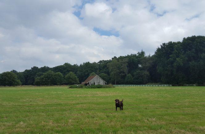 Haltern am See - Brookweg - Ausflüge mit Hund